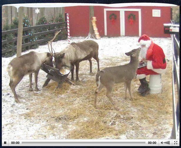 Reindeer live cam watch santa s reindeer in live time my 3 little
