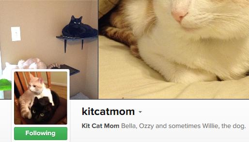 kitcatmom