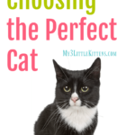 5 Steps to Choosing The Perfect Cat