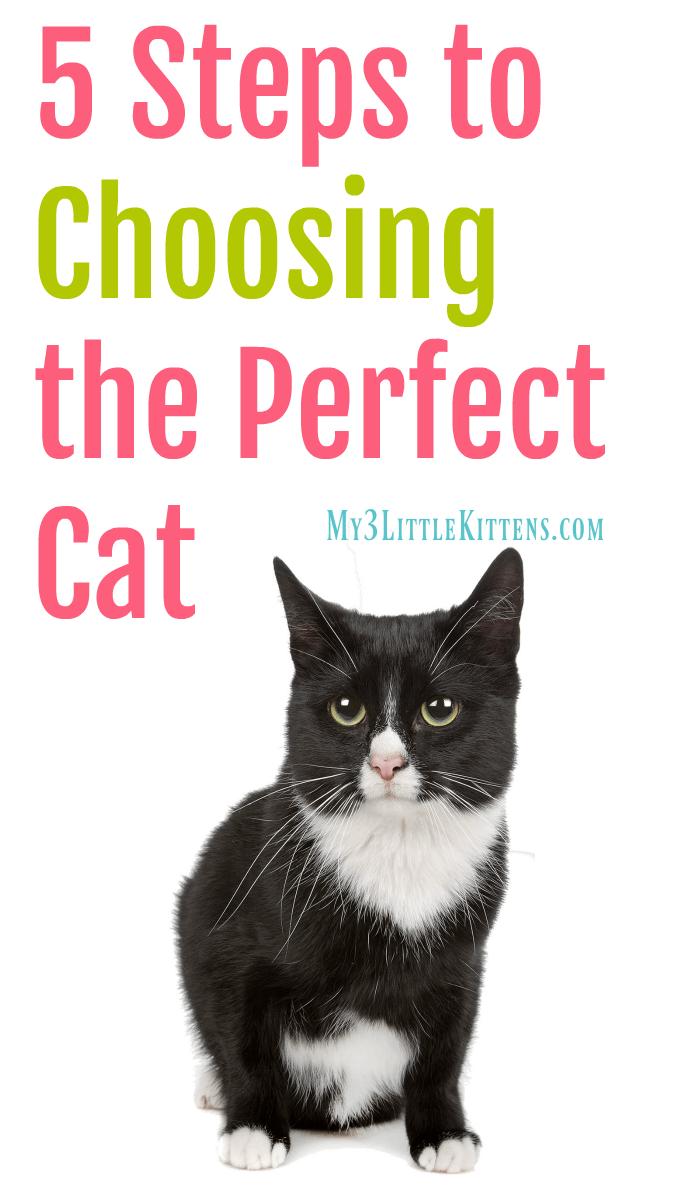 These 5 Steps to Choosing the Perfect Cat will help you may the right decision for a kitty cat!