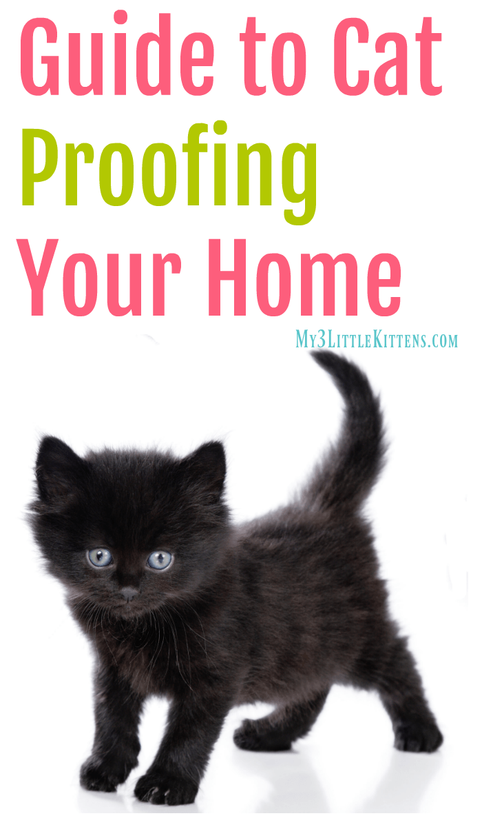 This Guide to Cat Proofing Your Home will have you cat proofing room to room in no time at all!