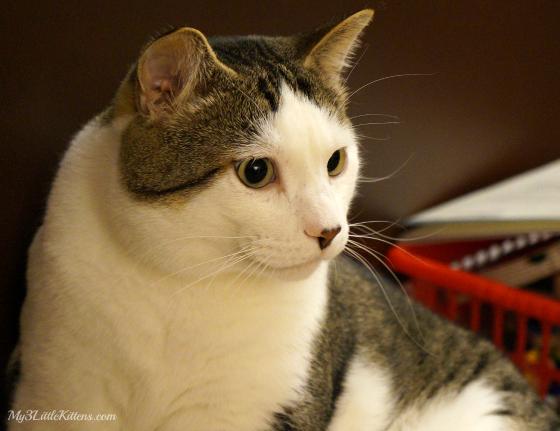 Choosing Healthy Cat Food