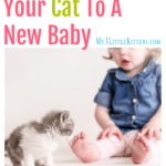 How to Introduce Your Cat to a New Baby
