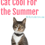 Tips for Keeping Your Cat Cool For the Summer