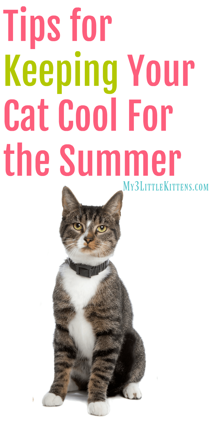 Tips for Keeping Your Cat Cool for the Summer. These beat the heat ideas are great for both indoor and outdoor kitty cats!