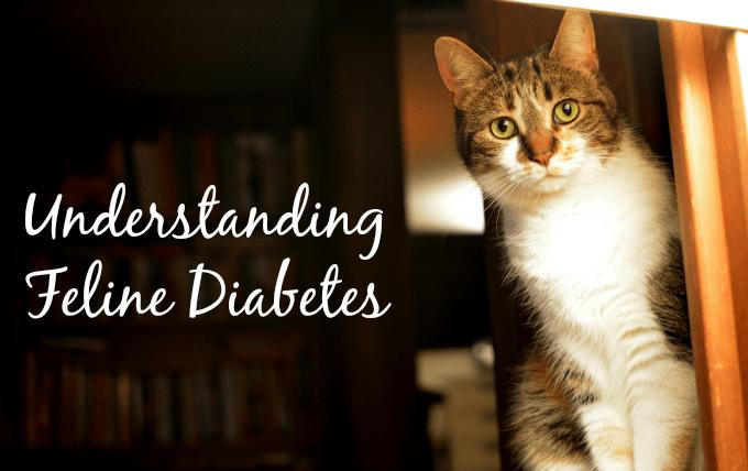 Best Cat Food For Feline Diabetis
