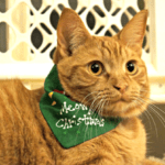 Treat Your Pet This Holiday #Giveaway