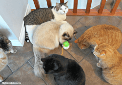 Ultimate Boredom Buster For Your Indoor Cat #MostPlayfulCat Giveaway