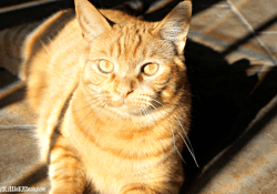 Tidy Cats Litter Giveaway #PurinaPetPeople