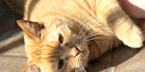 Quick Guide to Indoor and Outdoor Cat Care