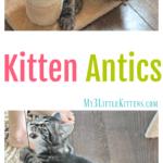 Kitten Antics & Purina Cat Chow