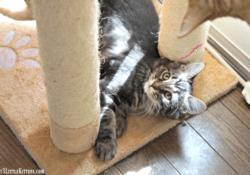 Kitten Antics & Purina Cat Chow Giveaway #CatsNaturally