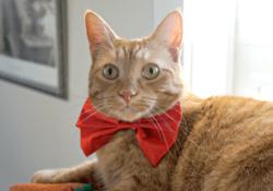 Love Your Cat Litter #LitterBoxLife – Arm & Hammer™ Clump & Seal™ Lightweight Cat Litter Giveaway