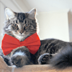 Adorable Cats in Bow Ties