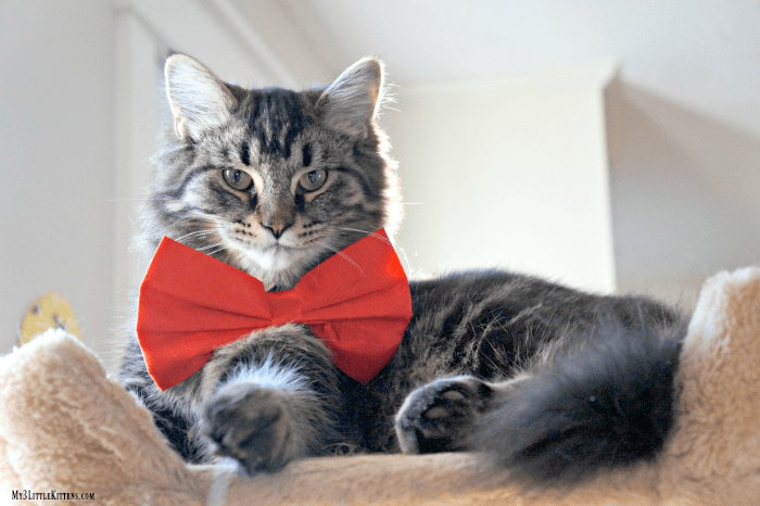 These adorable cats in bow ties will have you grinning from ear to ear.