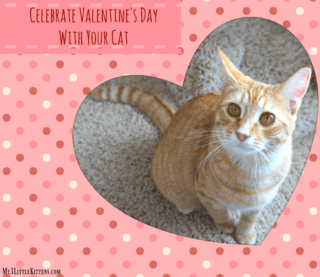 Celebrate Valentine's Day With Your Cat