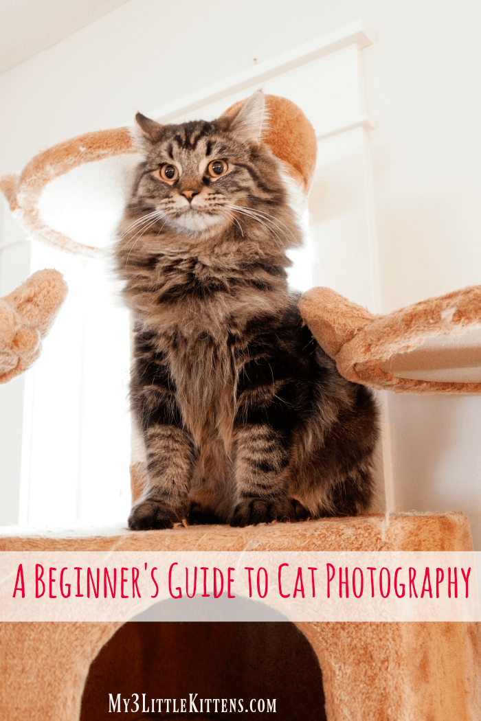 A Beginner's Guide to Cat Photography for photographers of all ages and skill levels!