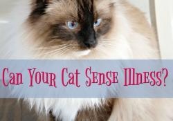 Can Your Cat Sense Illness?