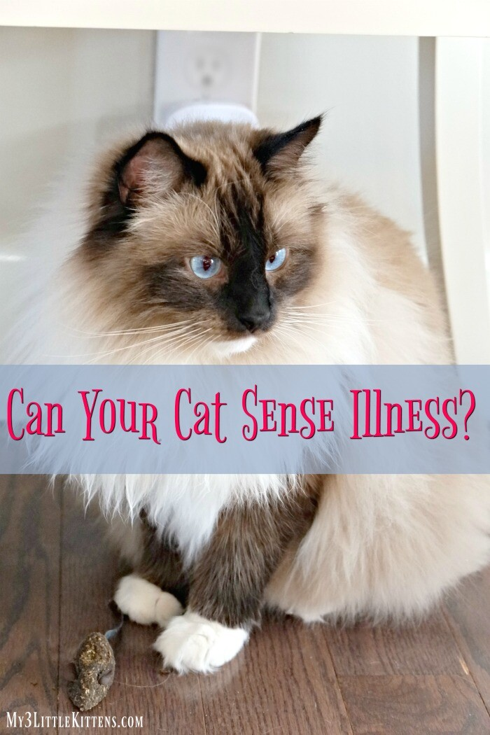 Ever Find Yourself Wondering if Your Cat Can Sense Illness? We ask the question!
