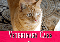 Veterinary Care on a Budget