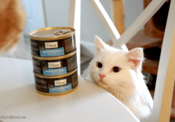 Nature's Logic Cat Food