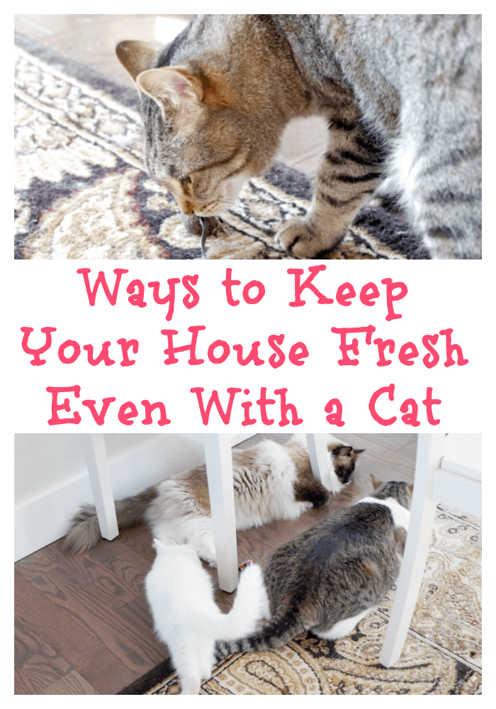 How To Keep Your House Smelling Good With A Cat