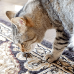 Ways to Keep Your House Fresh Even With a Cat