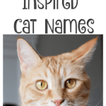 Disney Inspired Cat Names