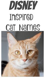 Disney Inspired Cat Names