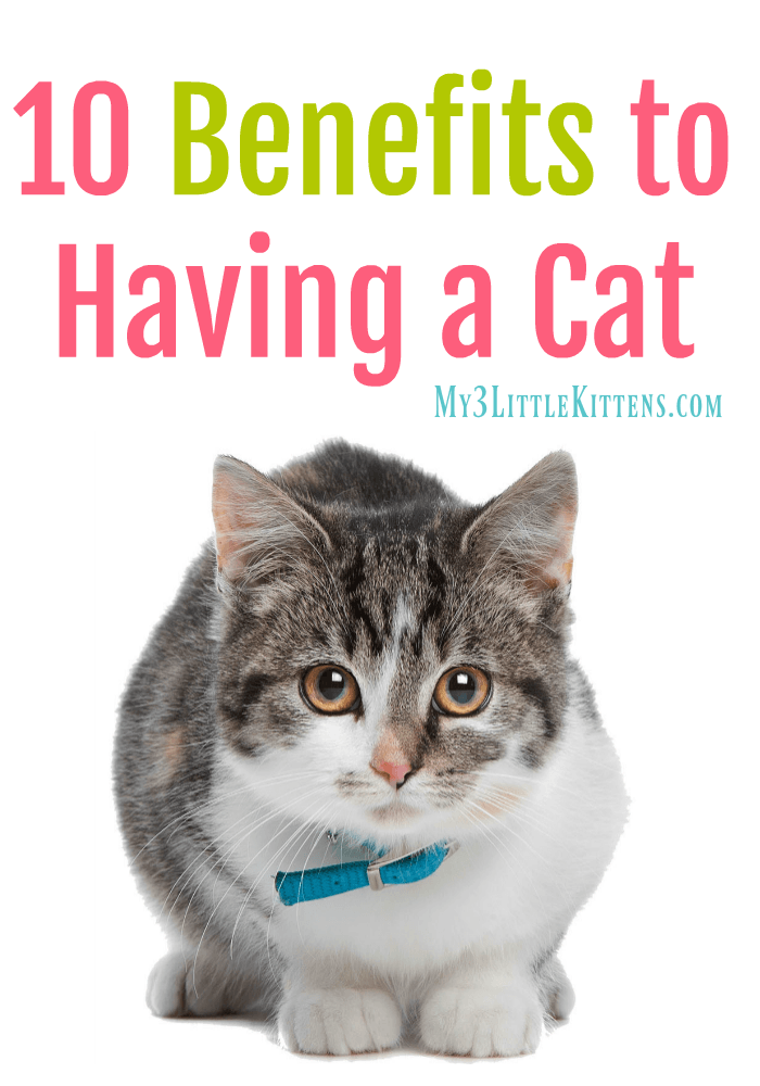 10 Benefits to Having a Cat. A must read for any kitty owner!