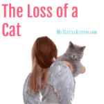 5 Crucial Stages of Grief Over The Loss of a Cat