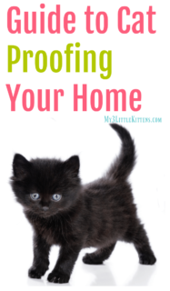 Guide to Cat Proofing Your Home