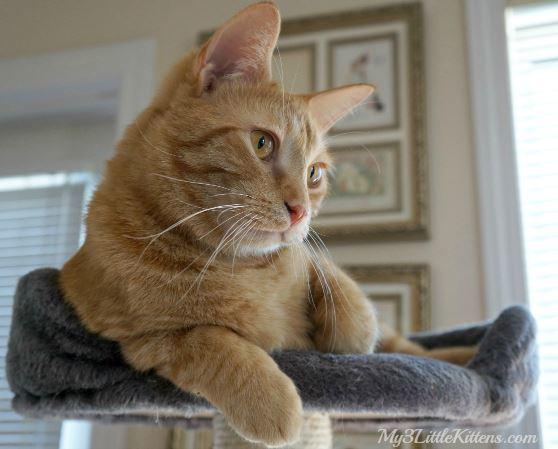 How to Choose a Cat Tree for Your Cat