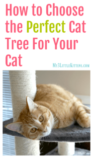 How to Choose the Perfect Cat Tree for Your Cat