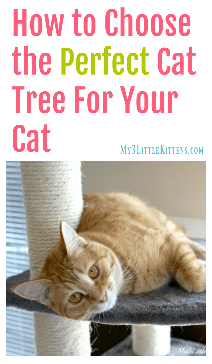 How to Choose the Perfect Cat Tree For Your Cat. Great tips that your kitty will appreciate!