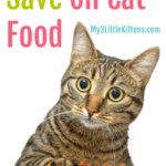 5 Tips to Save on Cat Food - Kitty Approved