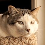 All About Cat Dandruff