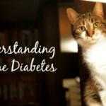 Understanding Feline Diabetes