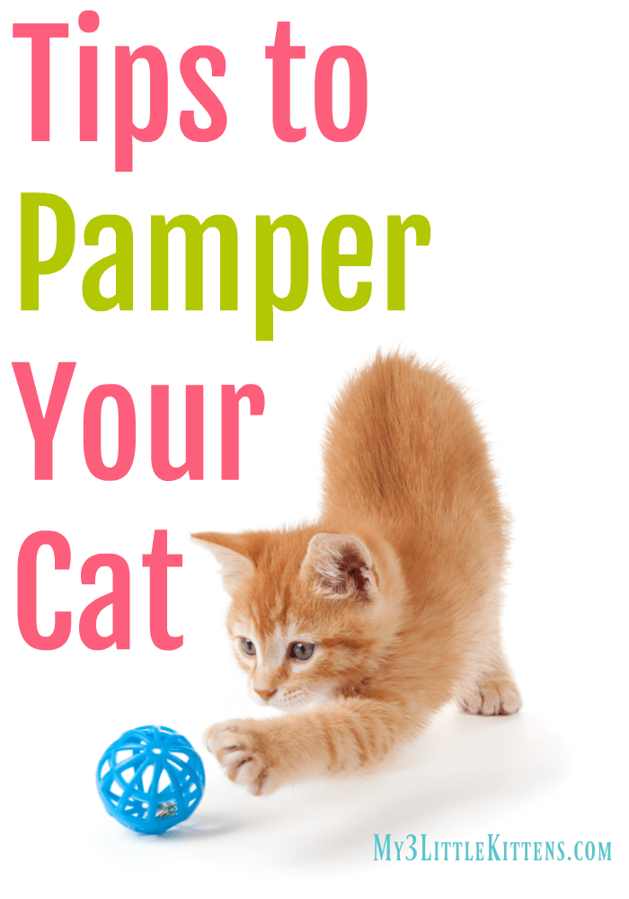 These Tips to Pamper Your Cat will keep your kitty active and healthy!