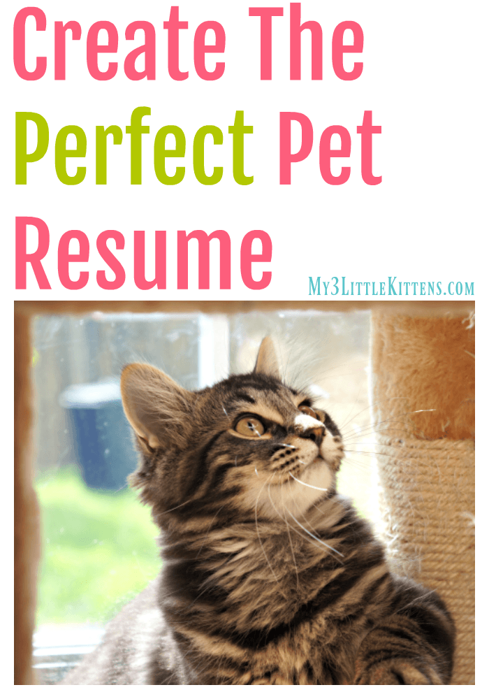 Create the Perfect Pet Resume. Your Kitty Cat Will Thank You for the Easy Idea!