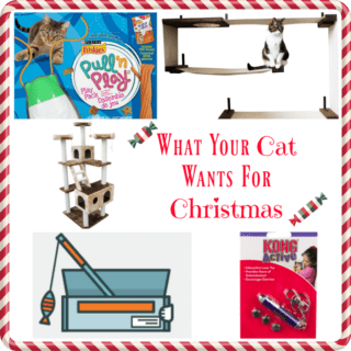 What Your Cat Wants For Christmas #PetWishList