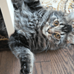 Track Your Cat – Tabcat Cat Tracker Device