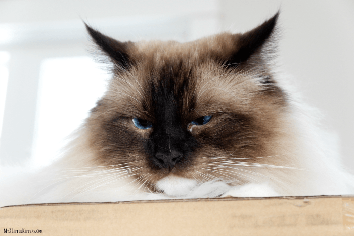 These Beginner's Guide to Cat Photography Tips are the perfect solution to your cat photography needs!