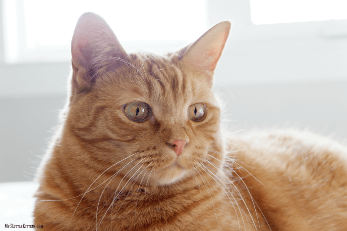 A Beginner's Guide to Cat Photography