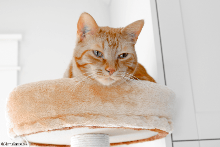 Cat photos don't have to be rough! A Beginner's Guide to Cat Photography