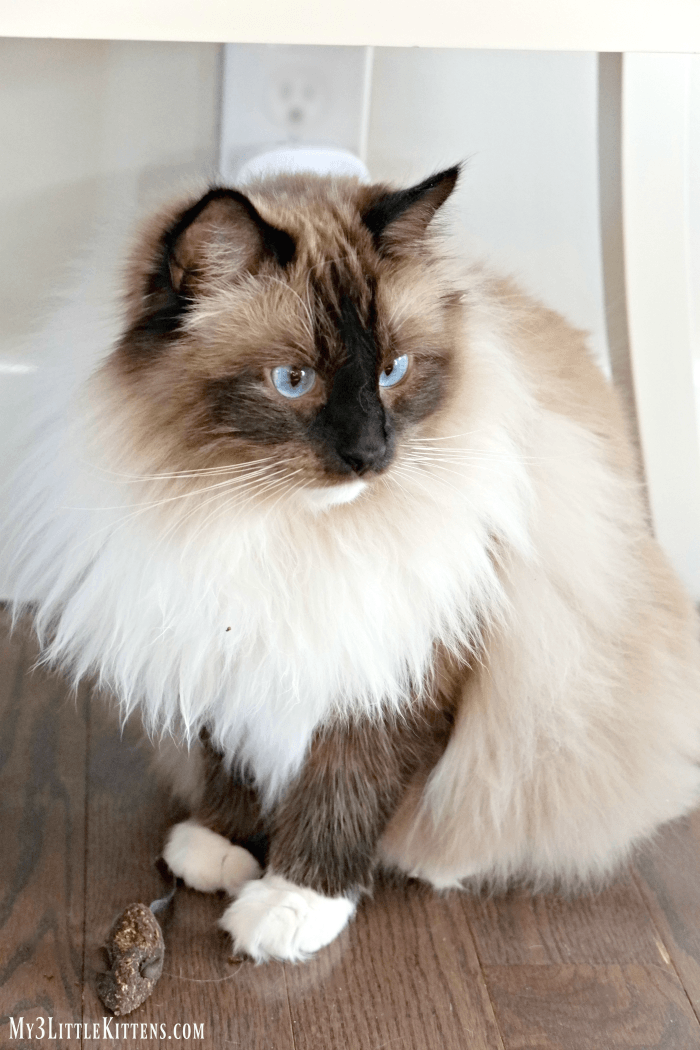 Can Your Cat Sense Illness. We ask this question and look for some surprising answers!