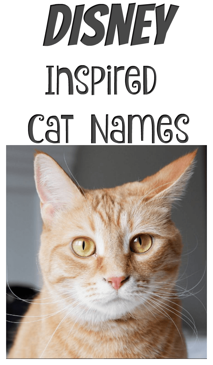 Cats From Disney Names