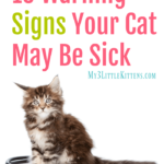10 Warning Signs Your Cat May Be Sick