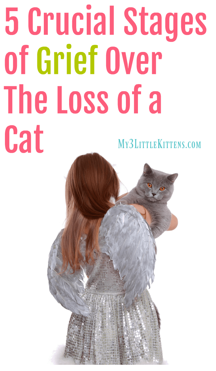 5 Crucial Stages of Grief Over The Loss of a Cat. There are ways to cope after goodbye.