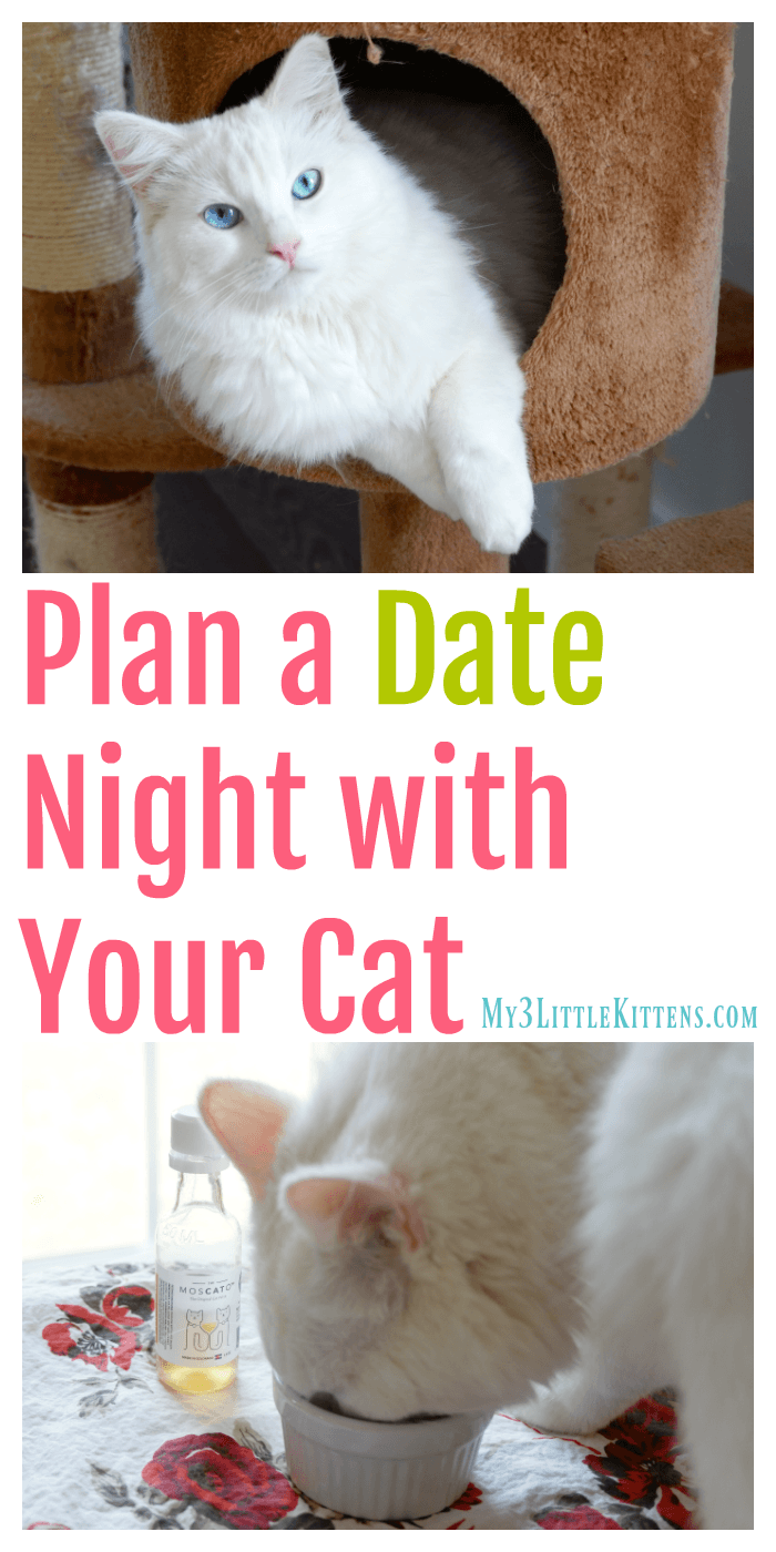 Plan a date night with your cat. These ideas will have you and your cat meowing the night away!